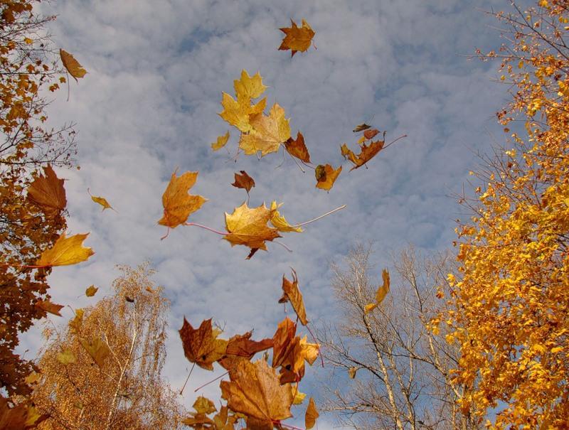 fallande löv